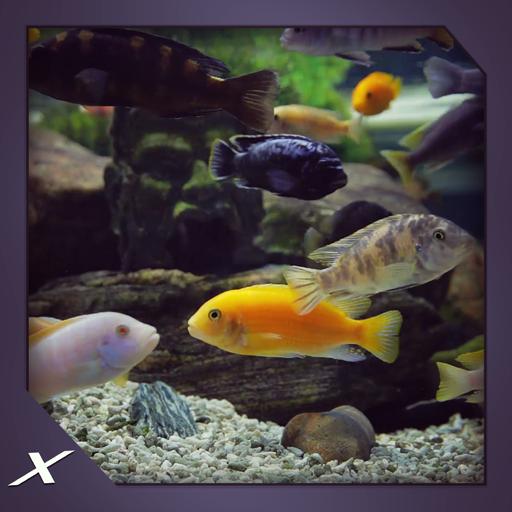 chichild-fish-aquarium