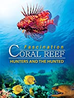Fascination Coral Reef - Hunters & The Hunted [HD]