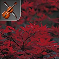 Picture Puzzle: Classical Leaves of Autumn