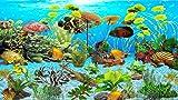 Tiger Oscar Aquarium [Download]