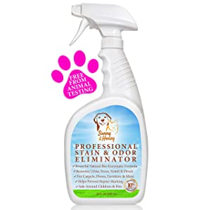 Best Carpet Cleaner Solution For Pets In 2019 Best