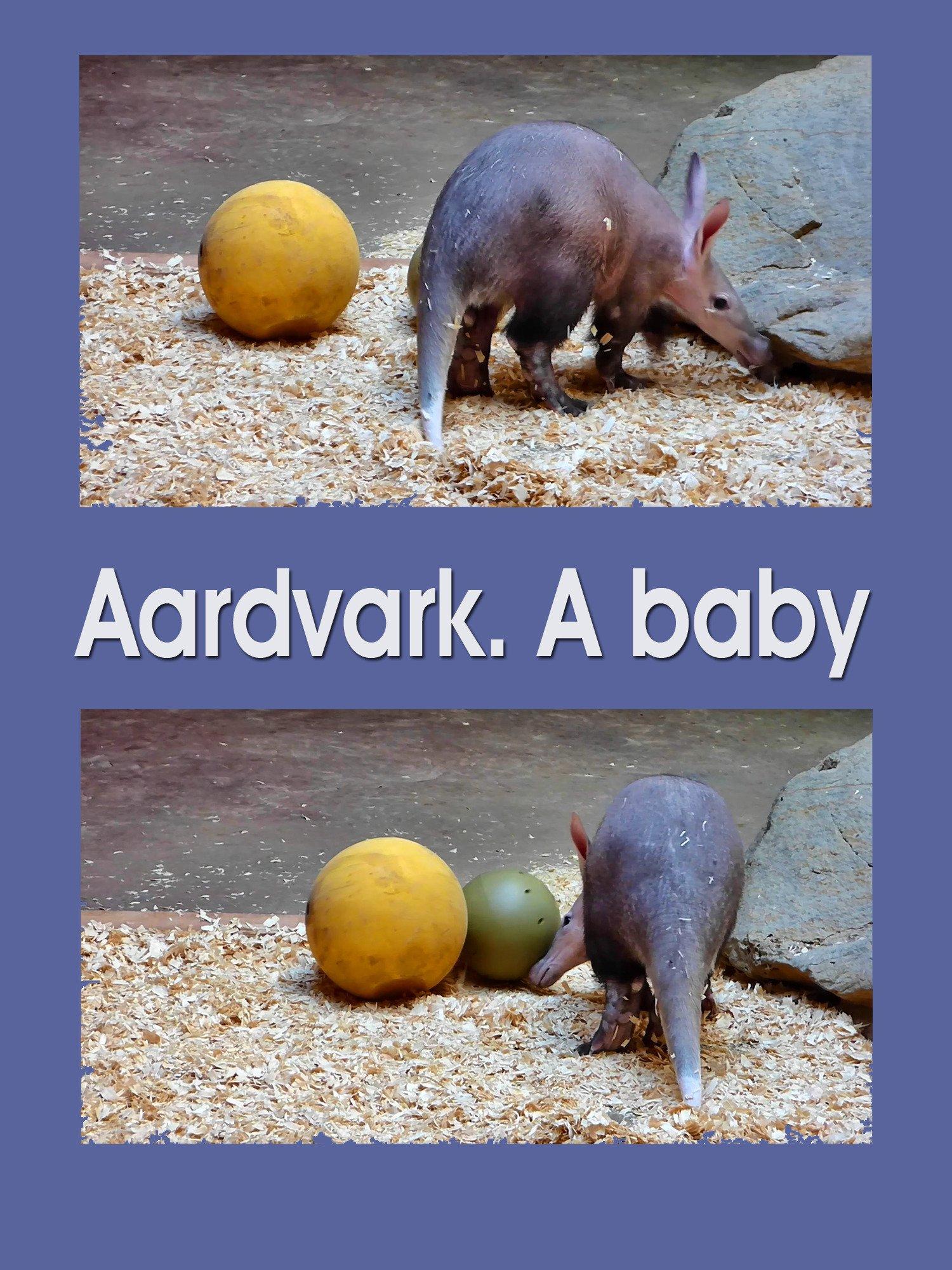 Clip: Aardvark. A baby