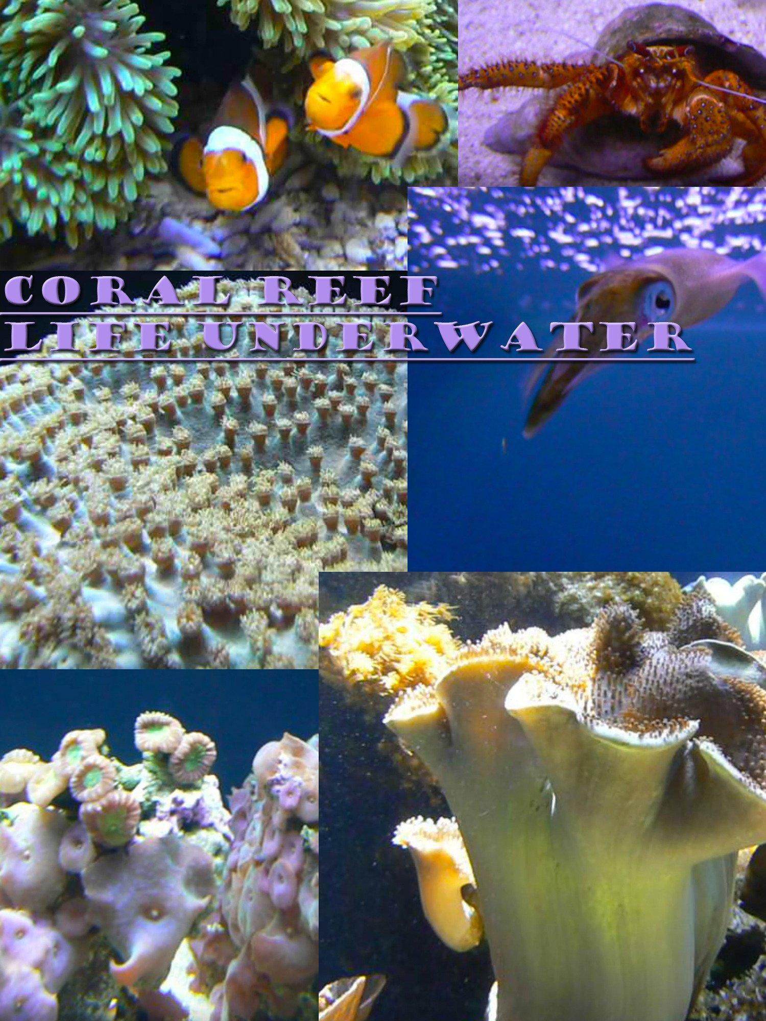 Coral Reef: Life underwater