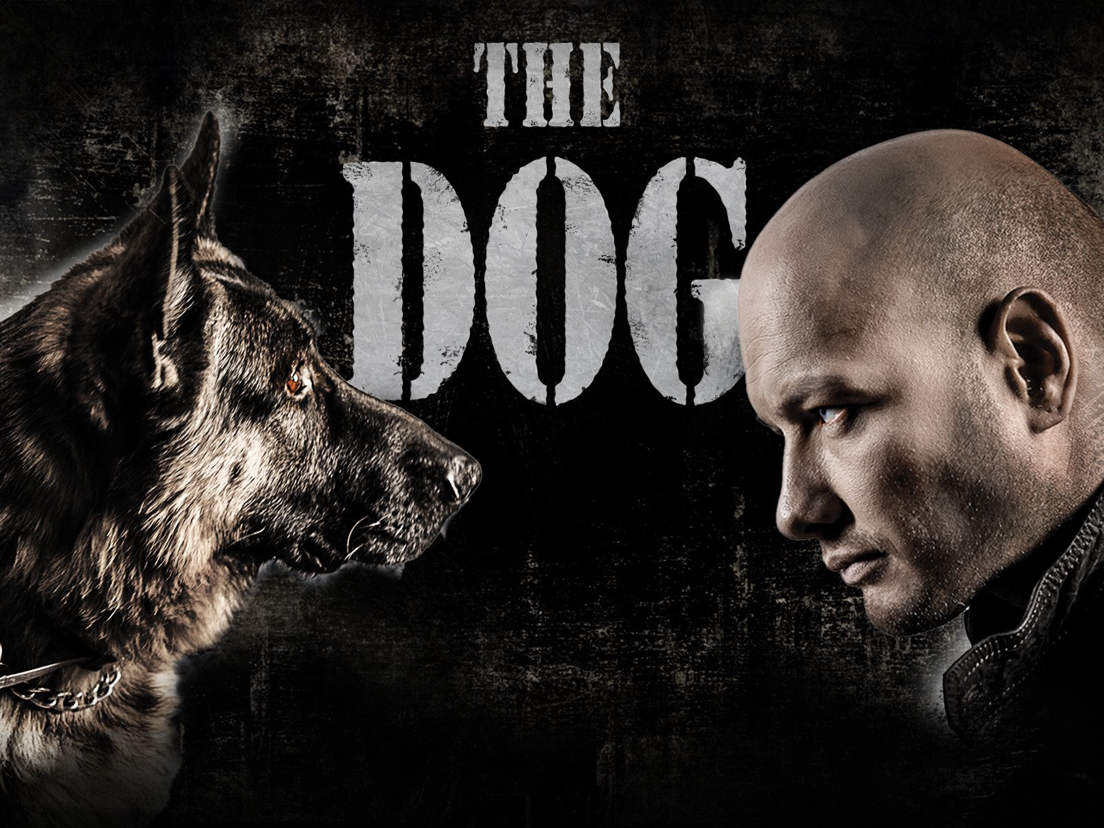 The Dog on Amazon Prime Instant Video UK