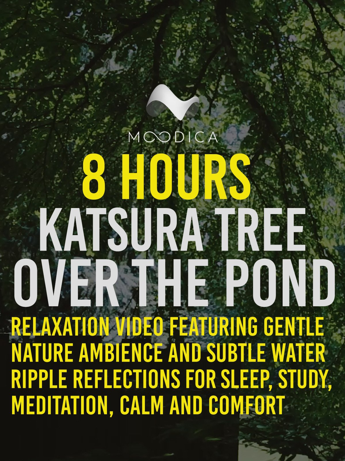 8 Hours: Katsura Tree Over The Pond: Relaxation Video Featuring Gentle Nature Ambience and Subtle Water Ripple Reflections For Sleep, Study, Meditation, Calm and Comfort