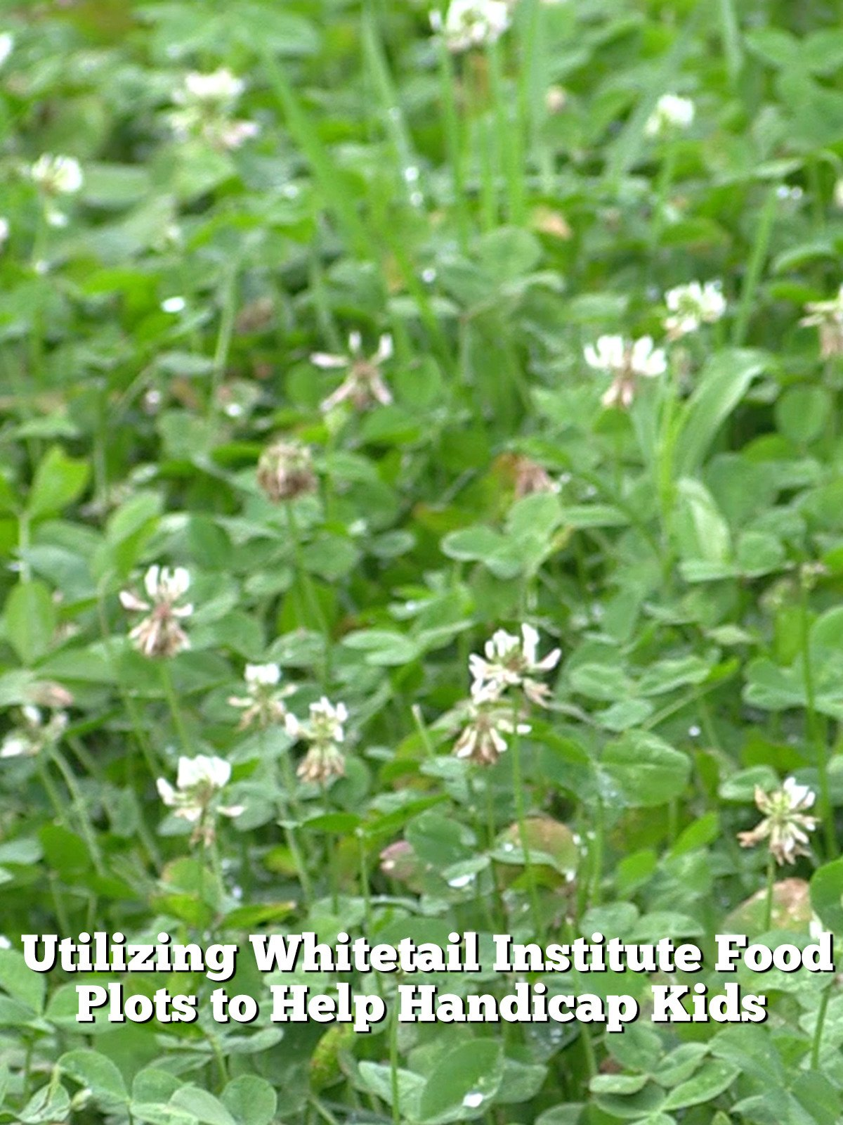How, When and Why You Should Frost Seed Your Food Plots