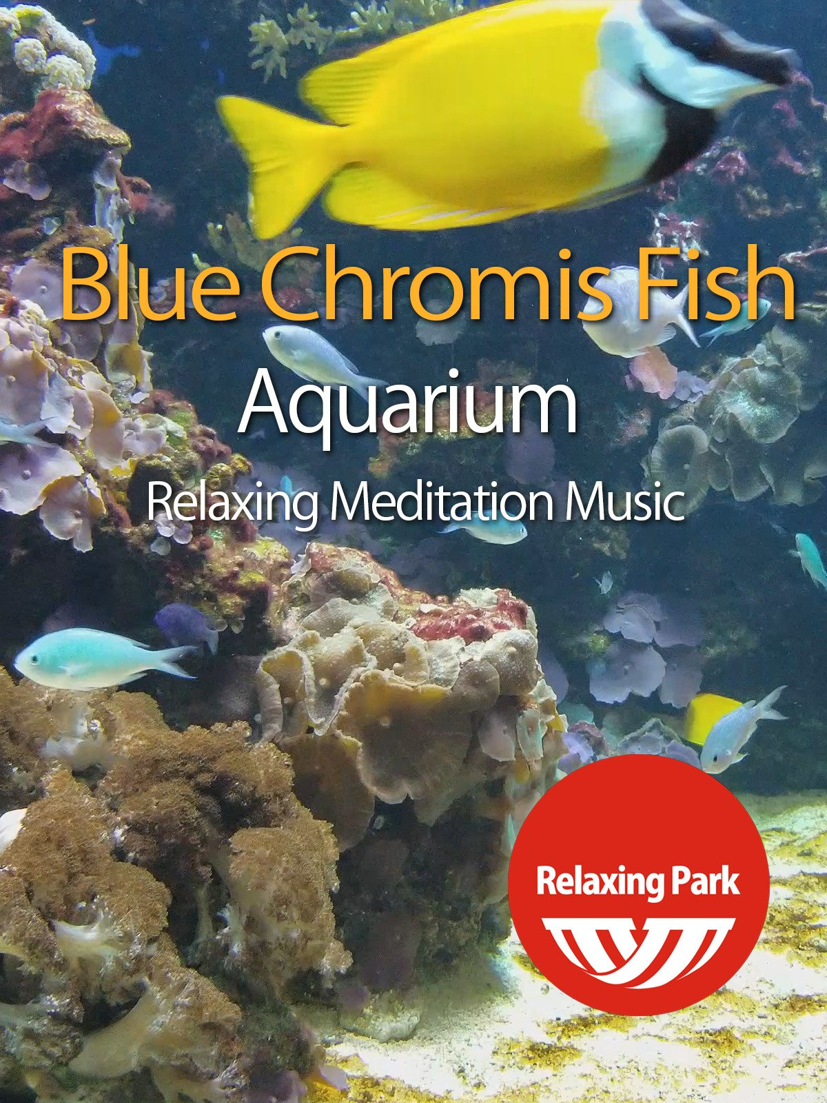 Blue Chromis Fish Aquarium with Relaxing Meditation Music