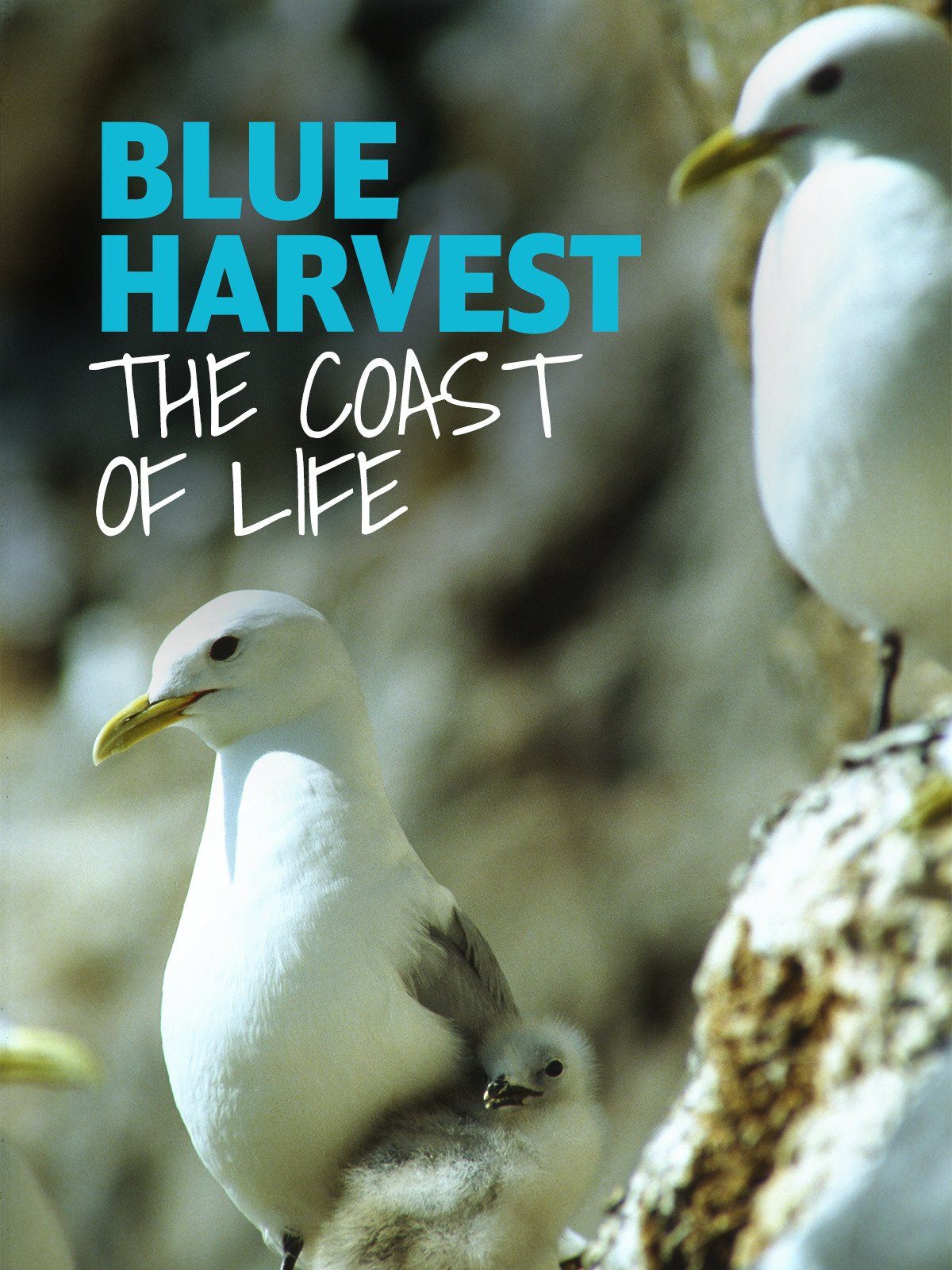 Blue Harvest: The Coast of Life