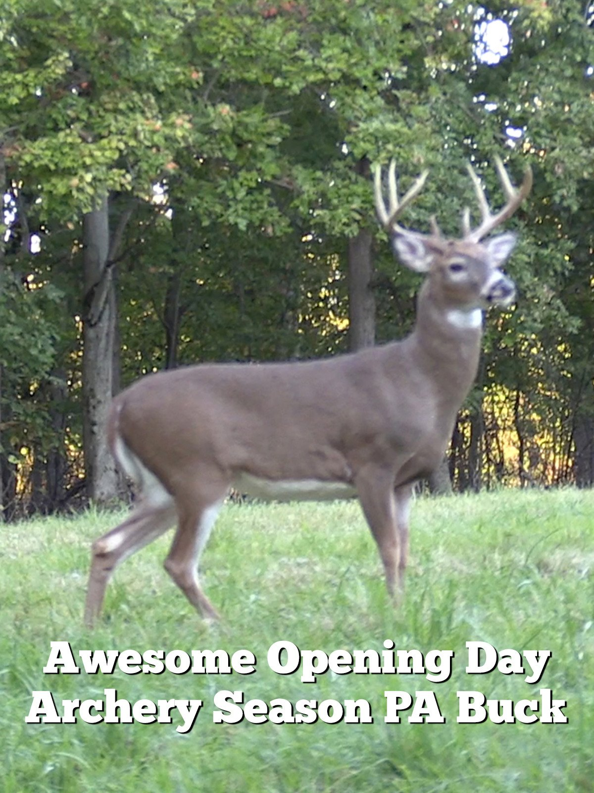 Awesome Opening Day Archery Season PA Buck