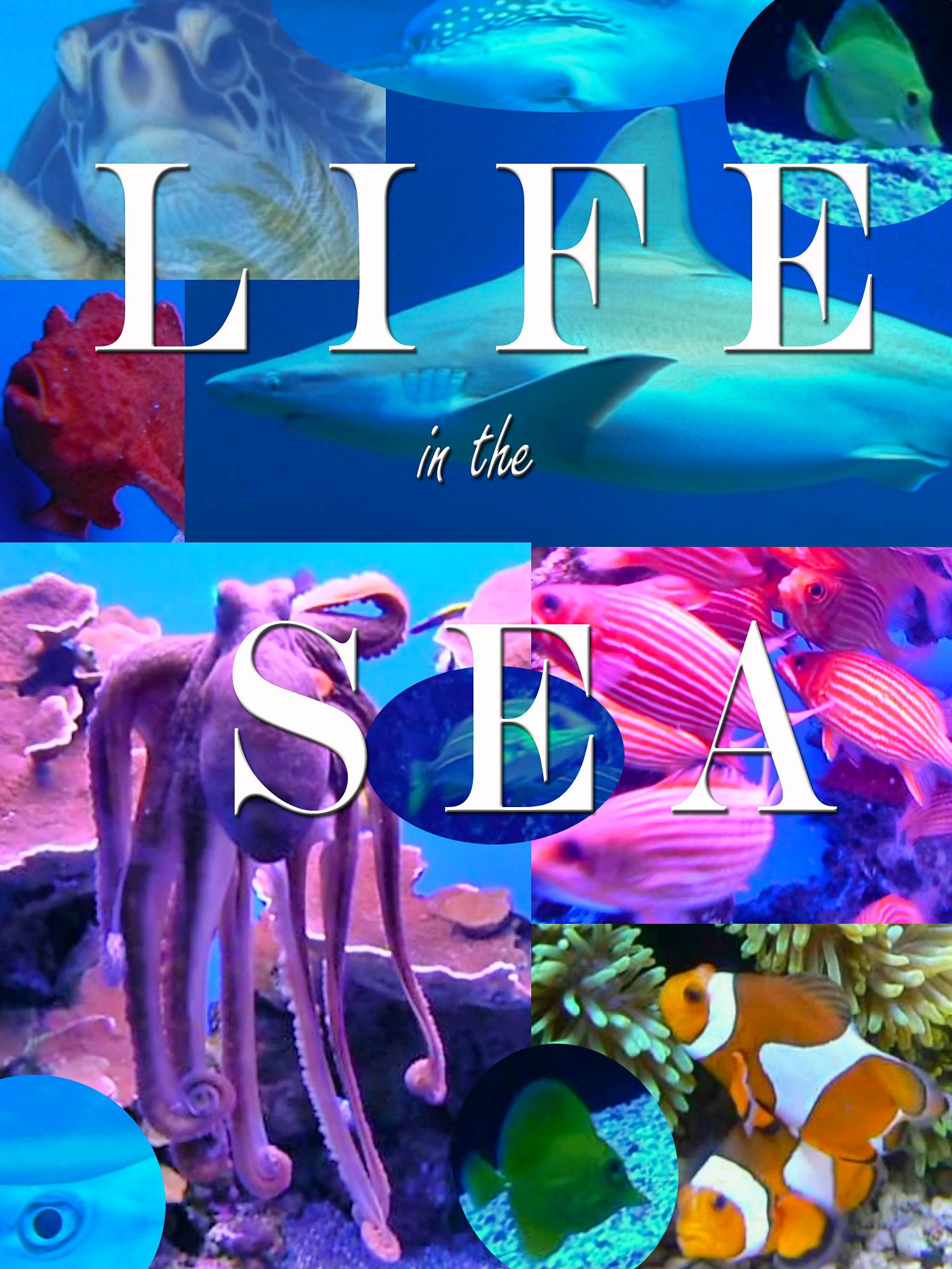 Life in the Sea on Amazon Prime Instant Video UK