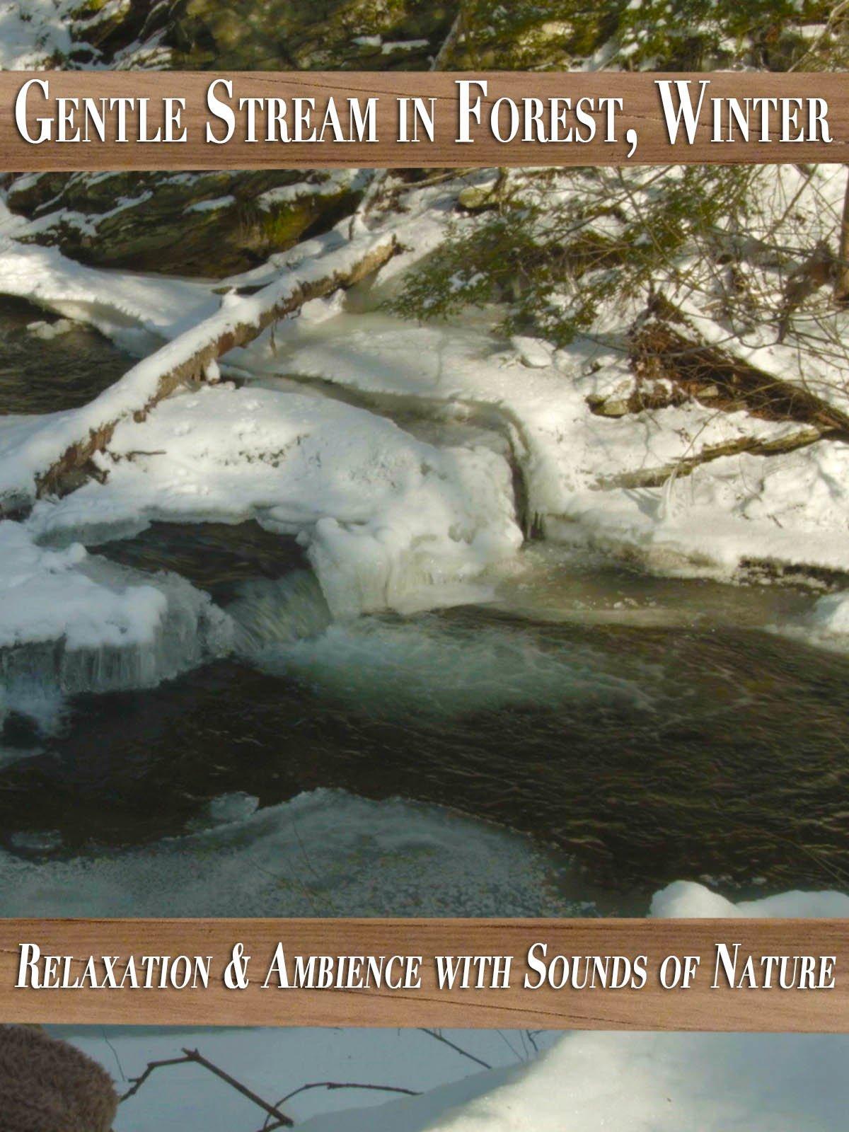 Gentle Stream in Forest, Winter