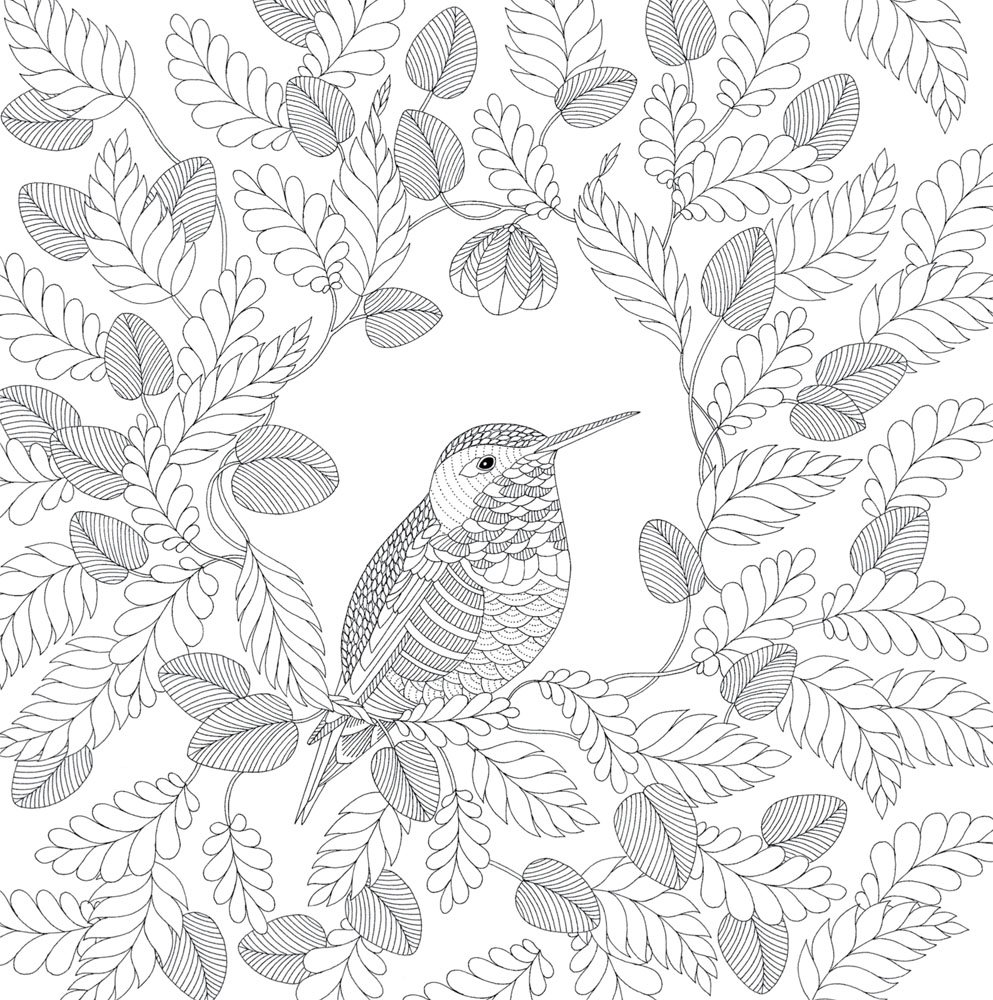 Color me draw me animal kingdom book - 111 Best Adult Coloring Animal Pages Images On Pinterest Coloring Books Coloring Sheets And Mandalas