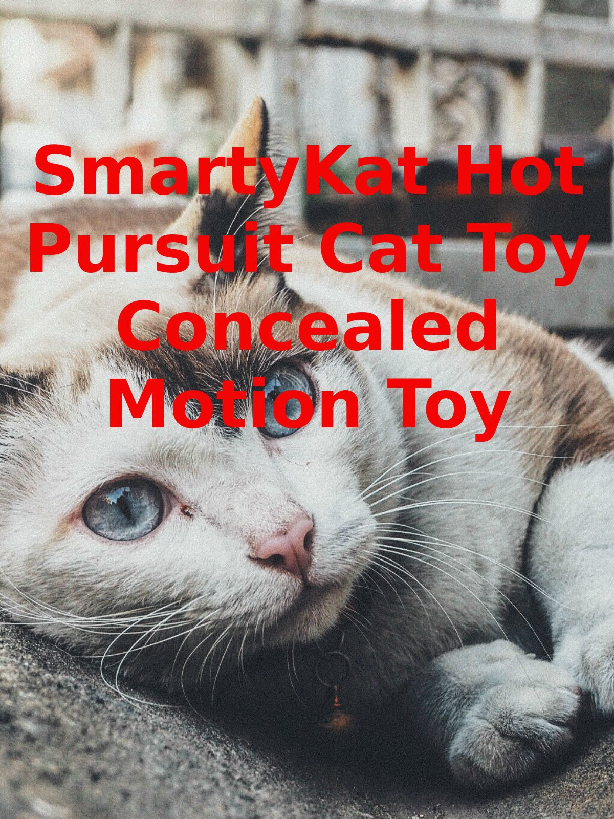 Review: SmartyKat Hot Pursuit Cat Toy Concealed Motion Toy on Amazon Prime Video UK