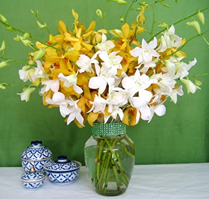 Just Orchids | Mixed Yellow & White Orchids | 20 Stems | Vase
