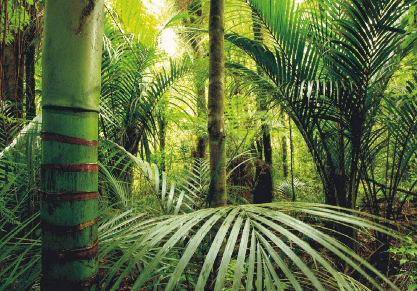 Fototapete Tapete Natur Dschungel Wildniss Pflanzen Foto 360 cm x 270 cm  BaumarktBewertungen und Beschreibung