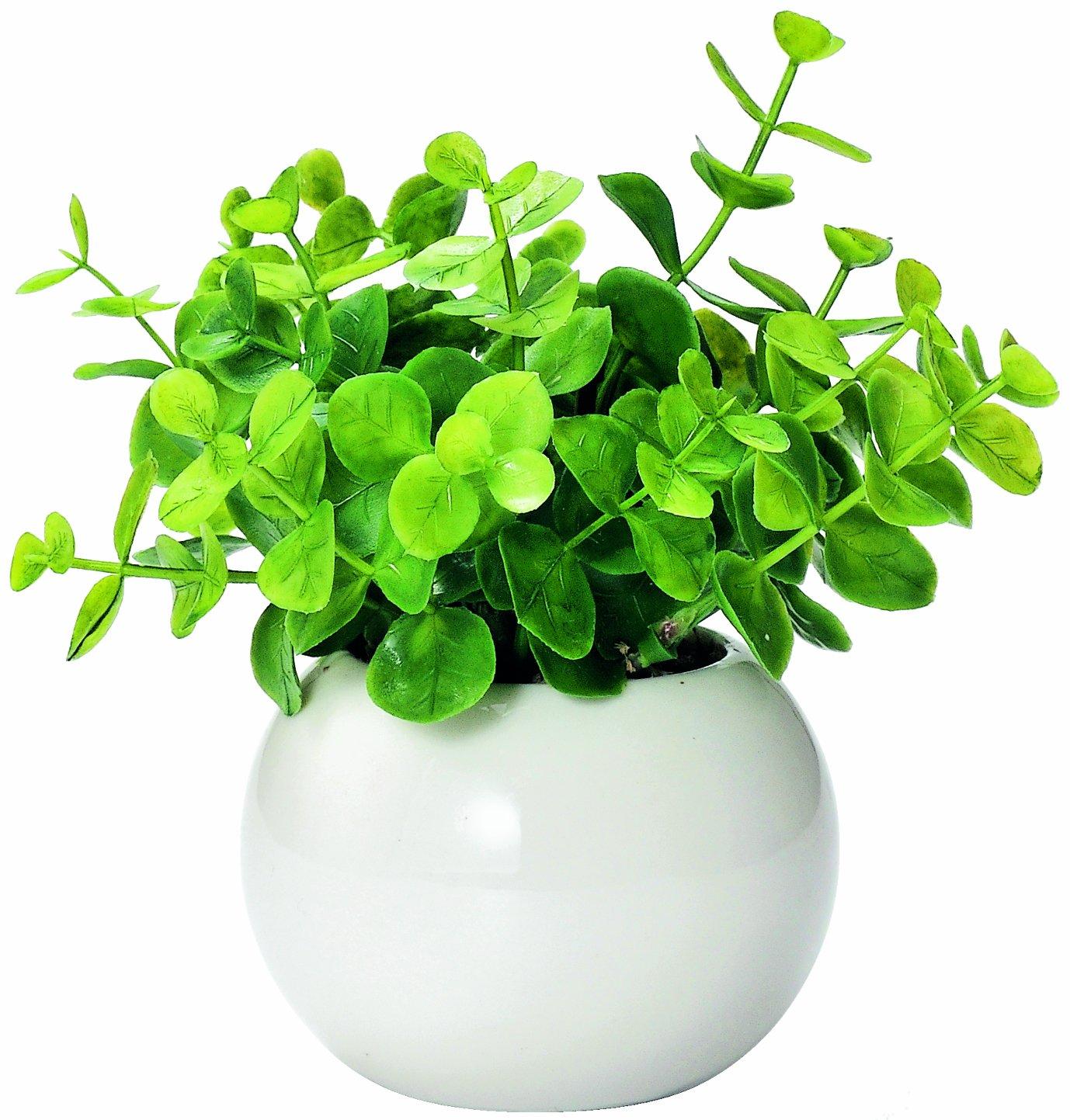 かわいい まあるい 光触媒 インテリア グリーン ユーカリ