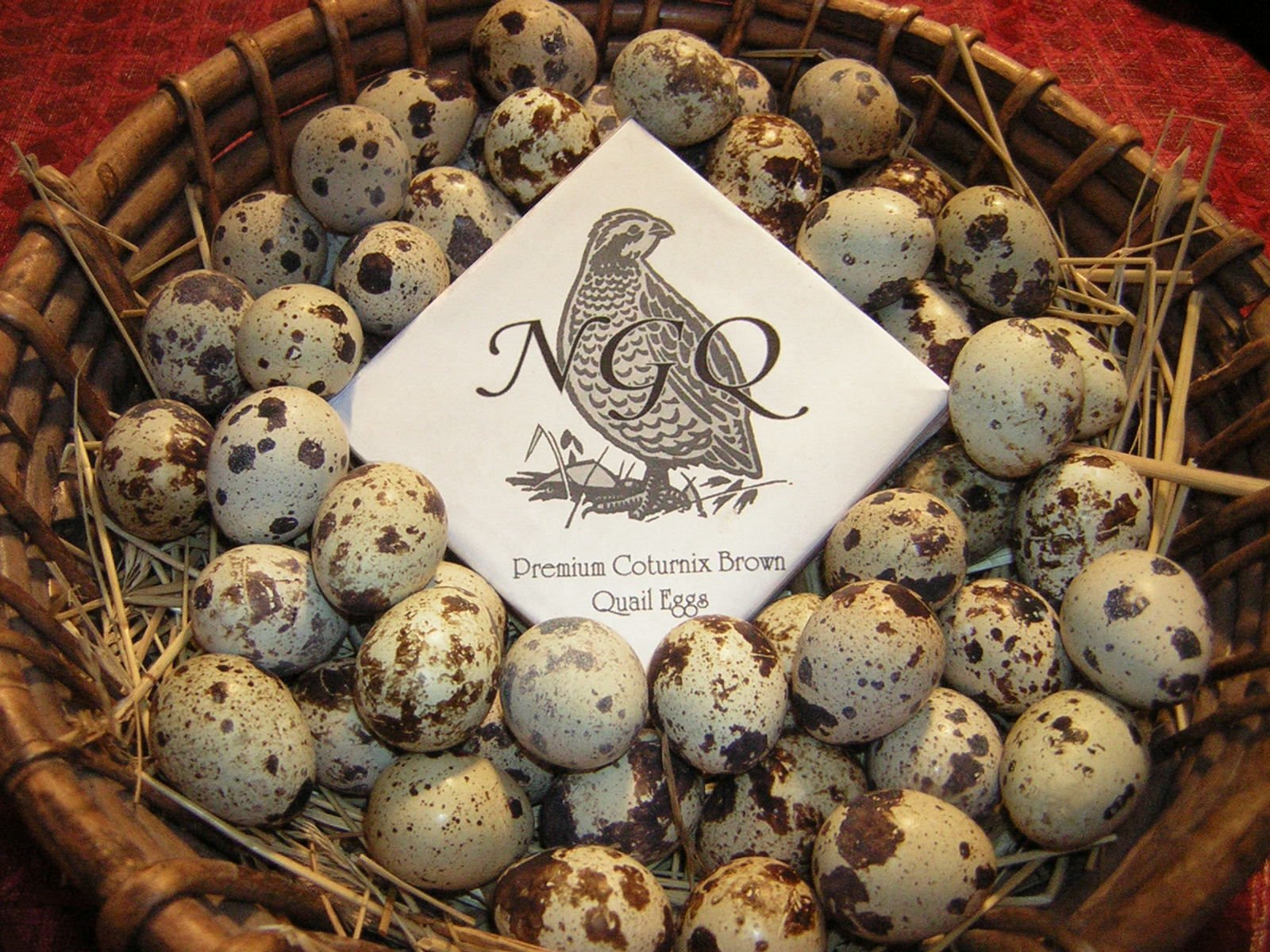 Fertile Quail Hatching Eggs