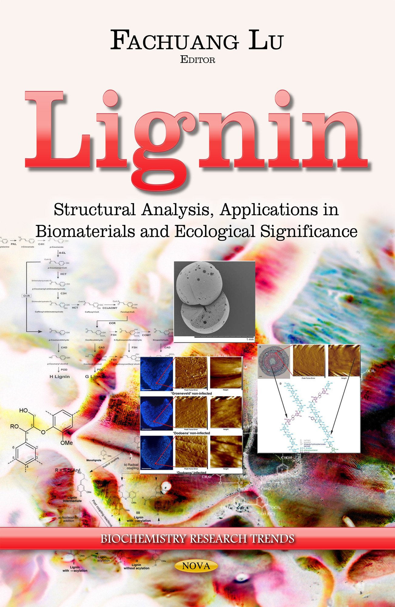 Lignin : structural analysis, applications in biomaterials and ecological significance