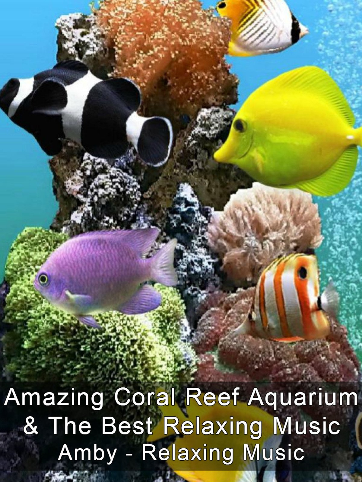 Watch 'Amazing Coral Reef Aquarium & The Best Relaxing Music