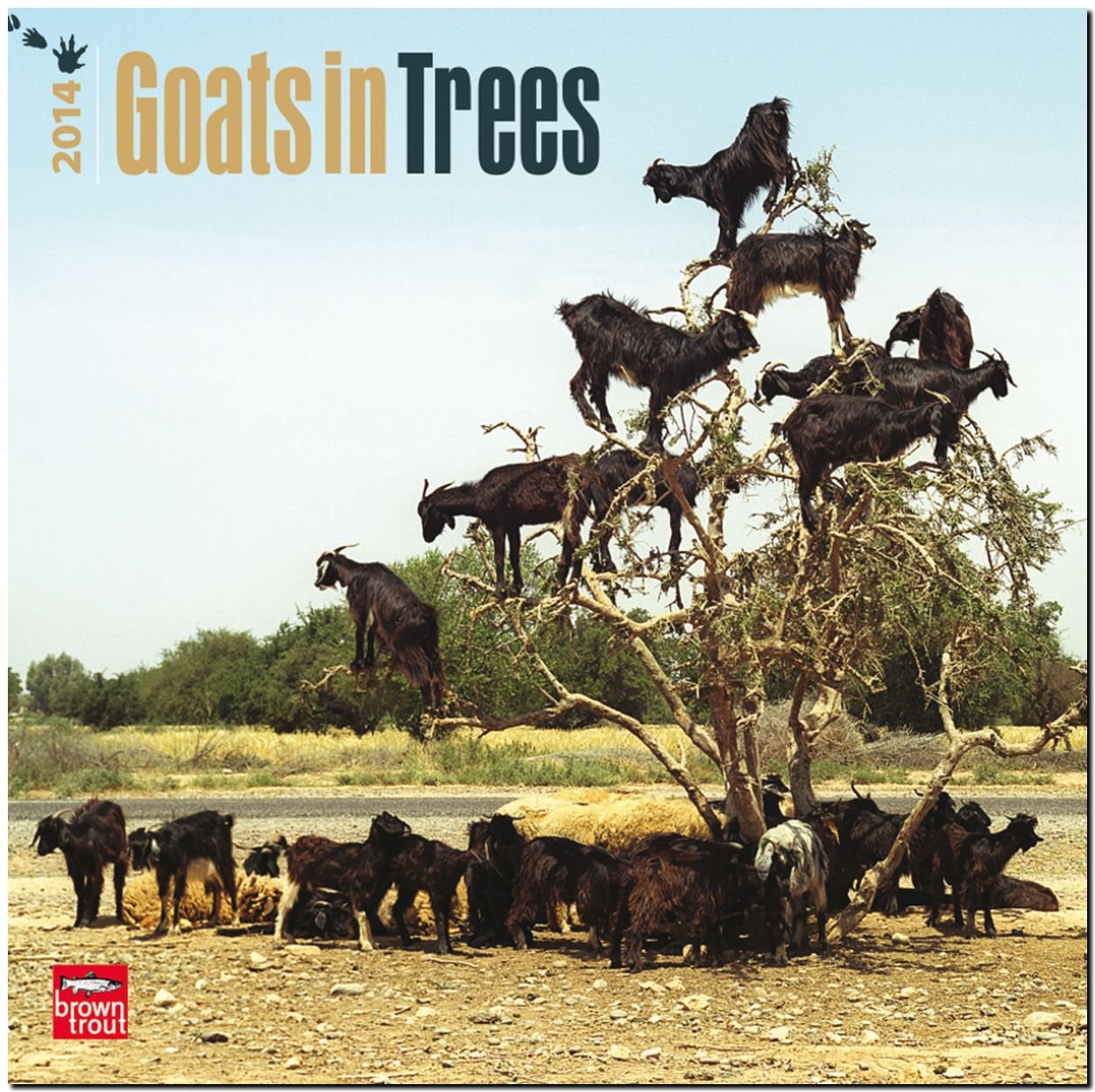 Goats In Trees Calendar 2012 Goats in Trees  Multilingual