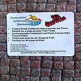Aquatic Foods Inc. Blackworms with Beef Heart, Freeze Dried California Blackworms… 10gram (Tamaño: 10 Grams)