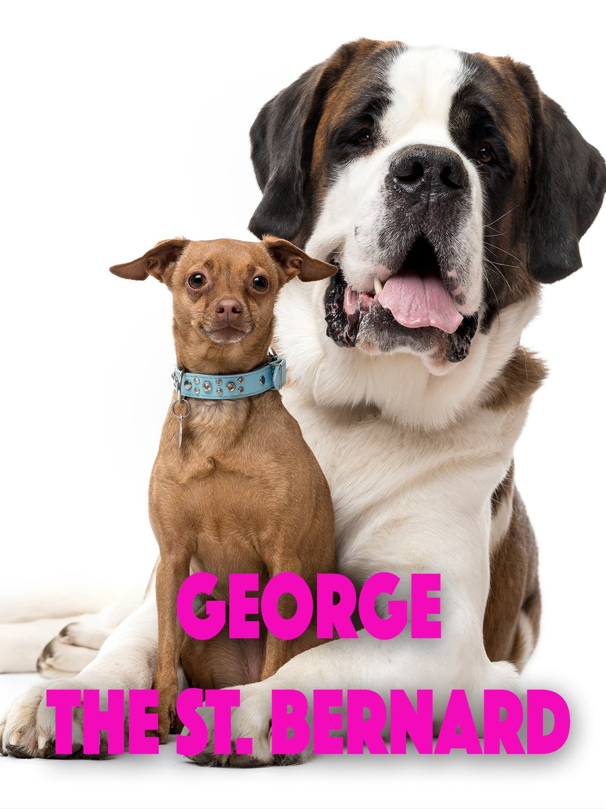 George The St. Bernard
