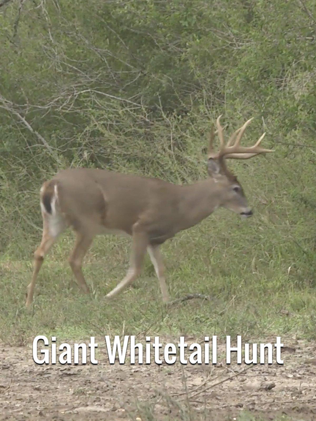 Giant Whitetail Hunt