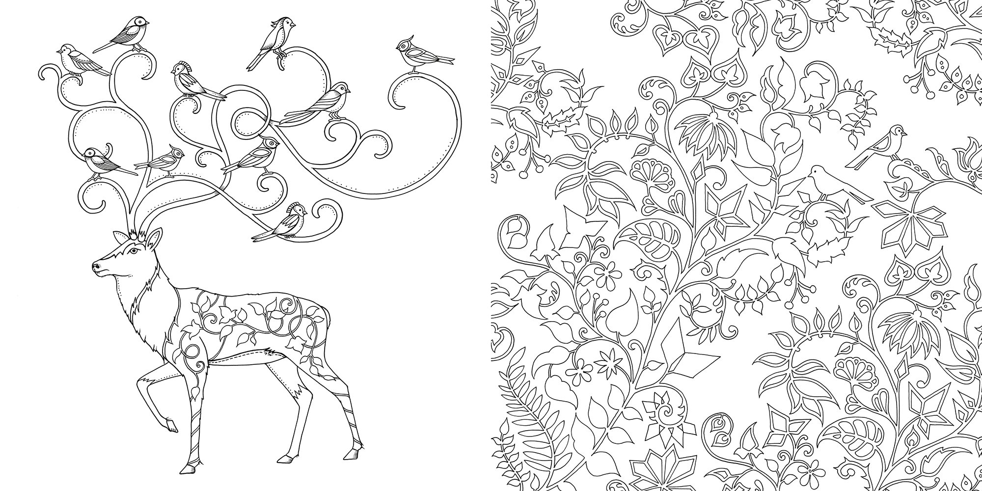 Colouring book - Buy Enchanted Forest An Inky Quest Coloring Book Book Online At Low Prices In India Enchanted Forest An Inky Quest Coloring Book Reviews Ratings