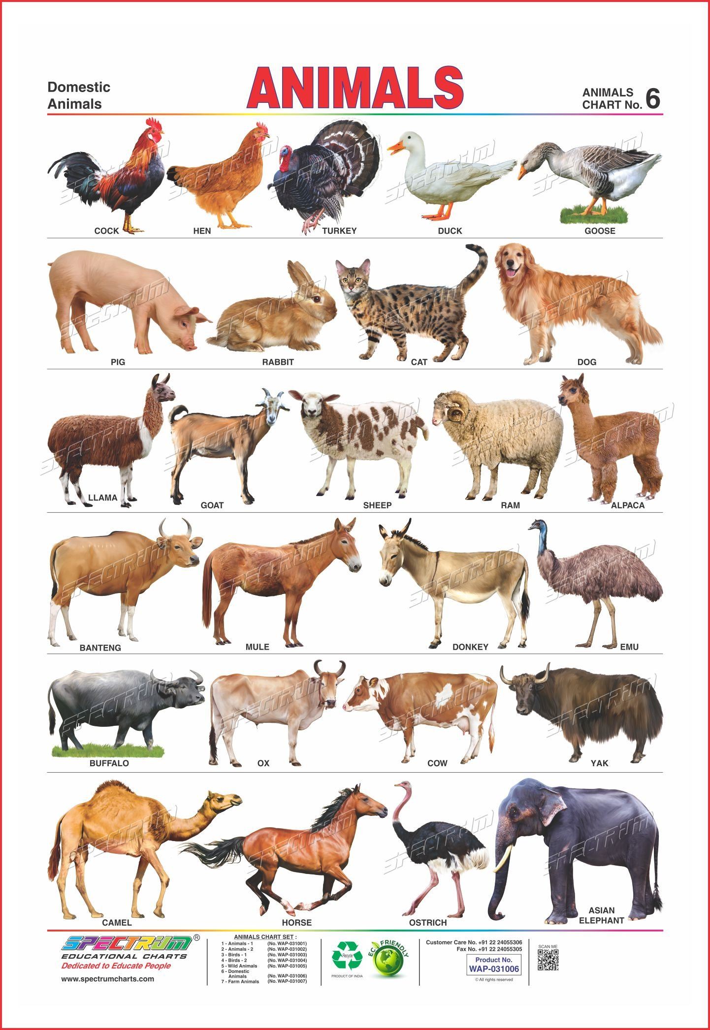 a history of the domestication of wild cattle The domestication of the plant was arguably the single most important technological advance in our history these centers of origin are the places where vavilov suggested the currently cultivated crop species were originally domesticated from the wild cattle before crops: the.