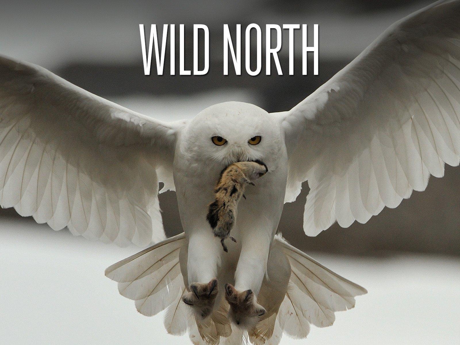 Wild North on Amazon Prime Instant Video UK