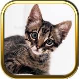 Kitty Cat Jigsaw Puzzle Games