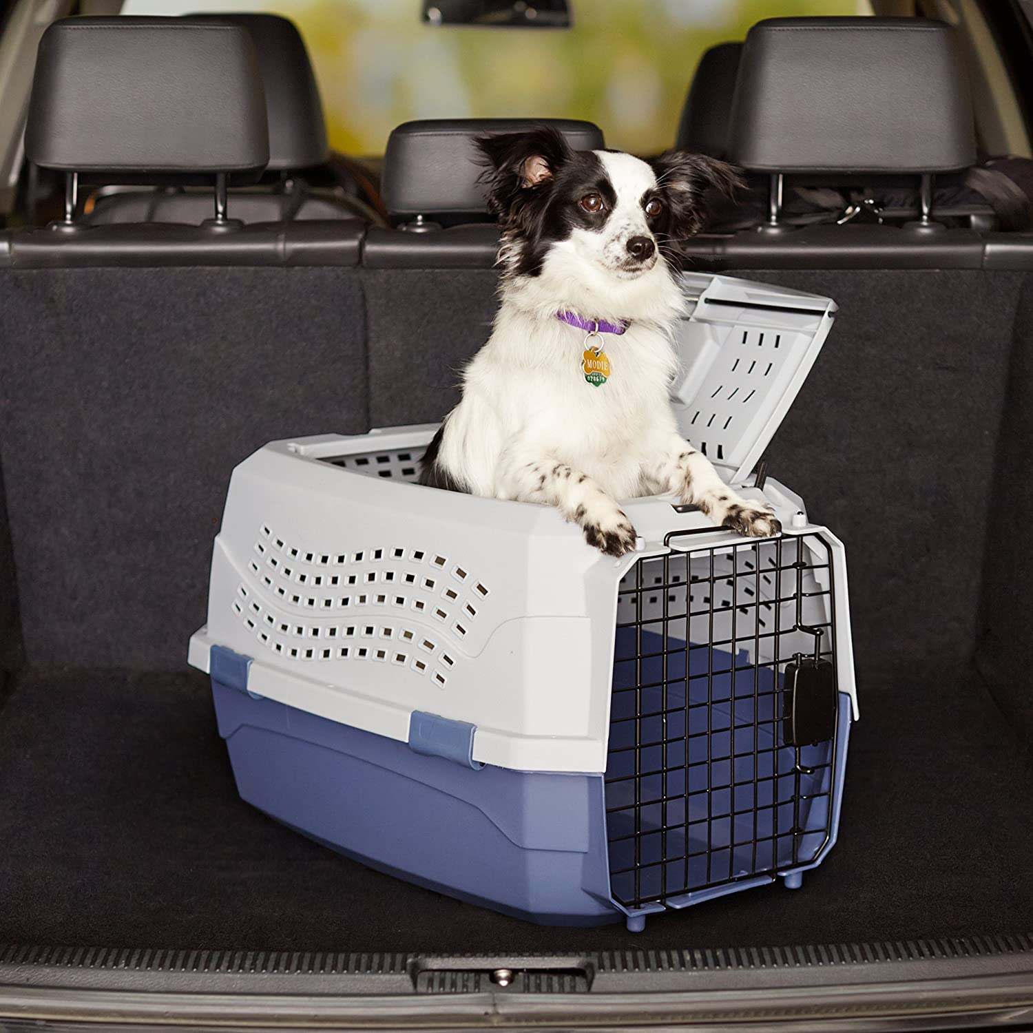 Buy Amazonbasics Two Door Top Load Pet Kennel (23inch) Online At Low  Prices In India  Amazon