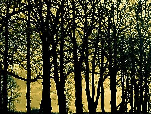 Hardwood Forest