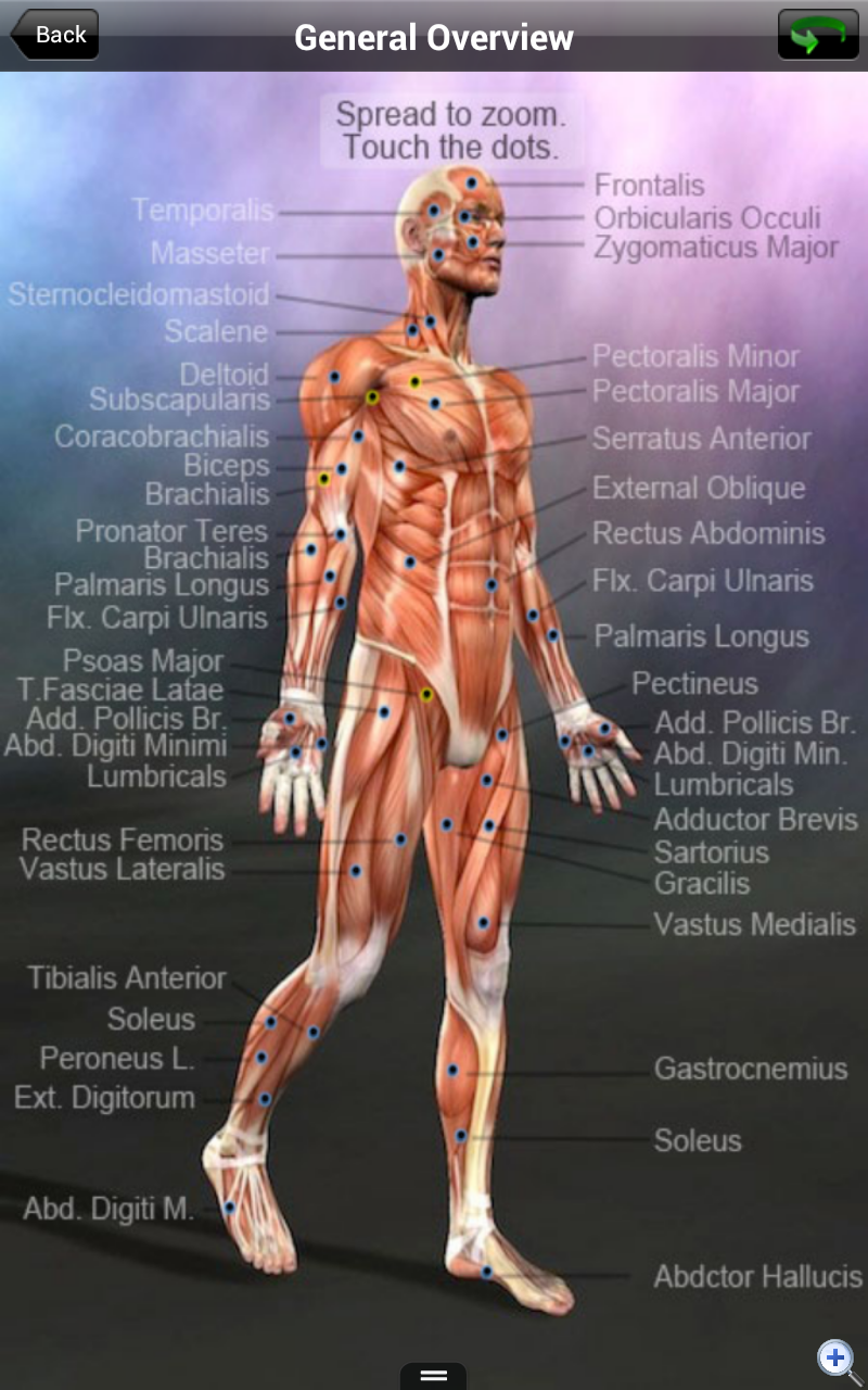 Learn Muscles: Anatomy is the Free App of the Day | Drippler - Apps ...