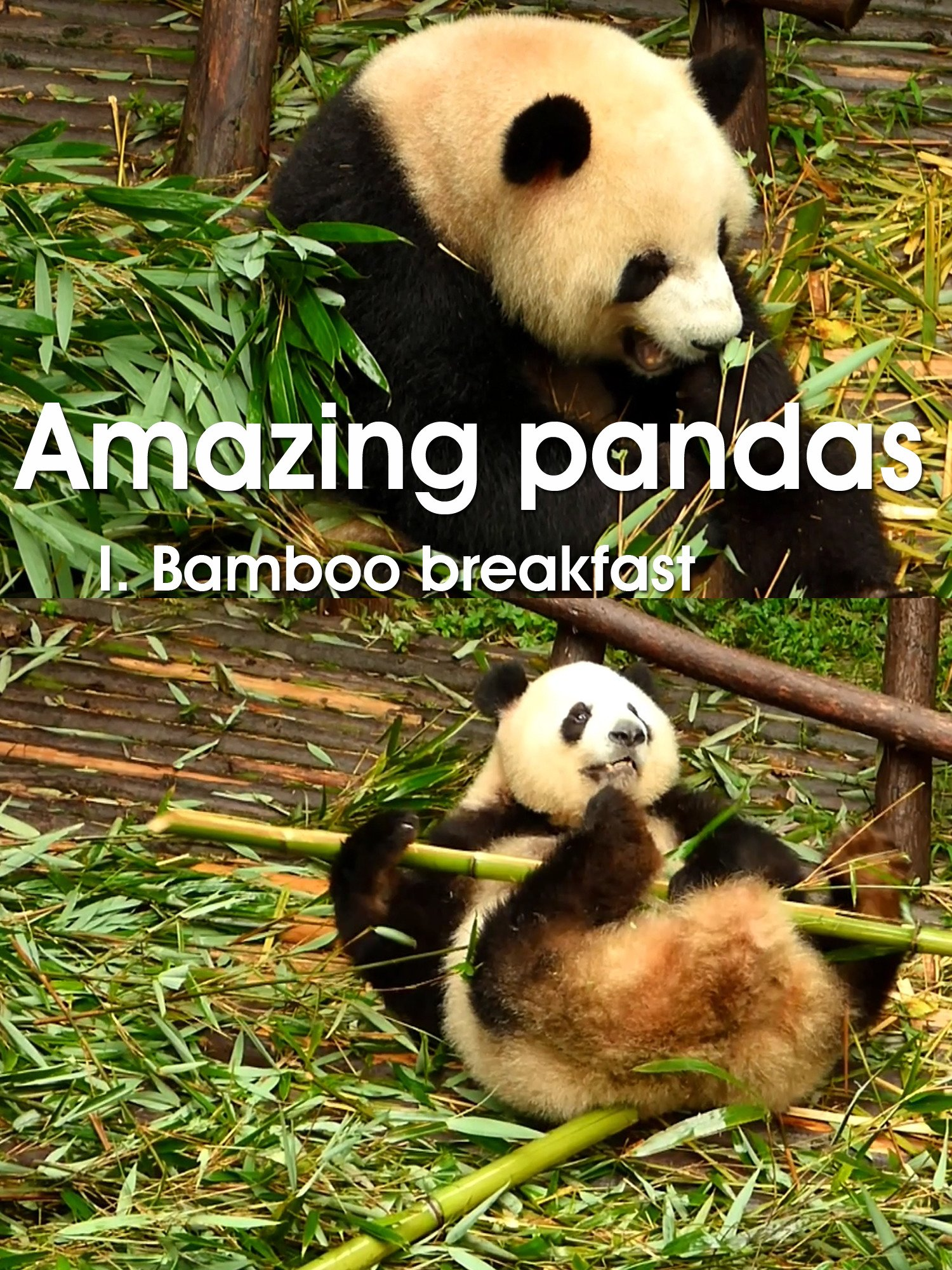 Amazing pandas. I. Bamboo breakfast