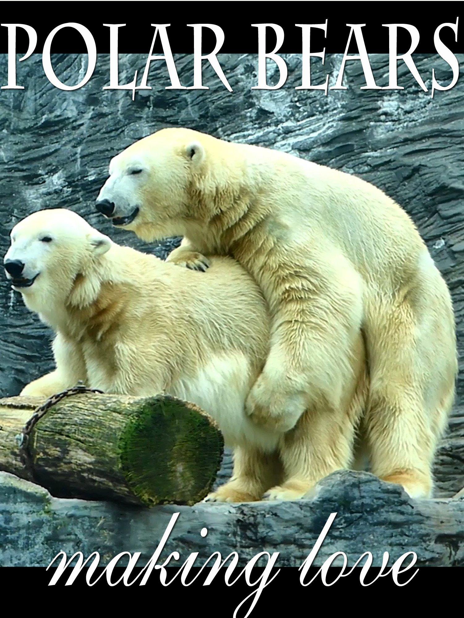 Polar Bears Making Love
