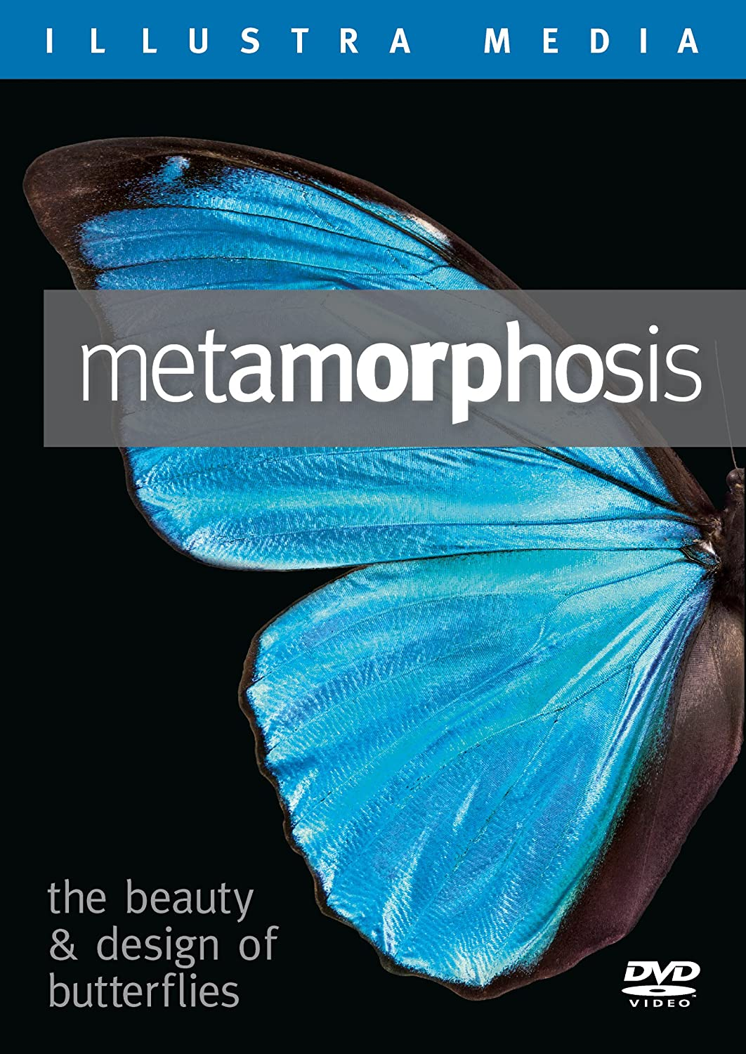 Metamorphosis The Beauty and Design Of Butterflies