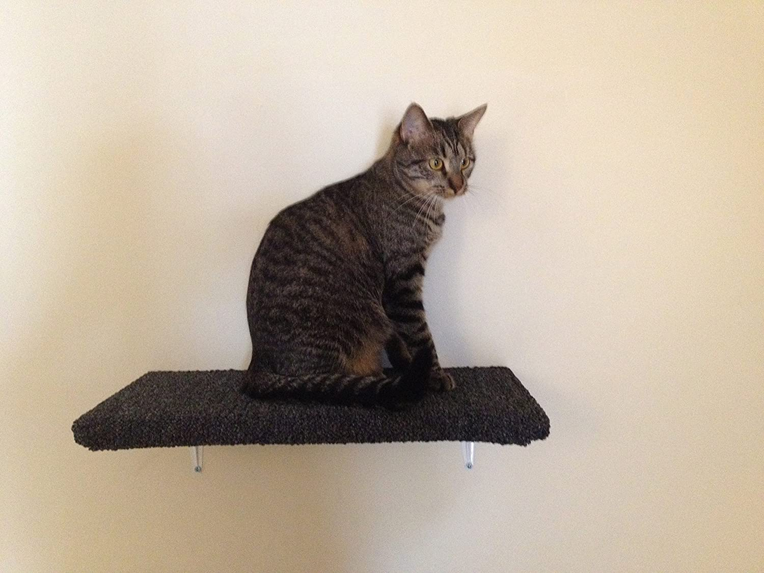 wall shelves for cats to climb on. Black Bedroom Furniture Sets. Home Design Ideas