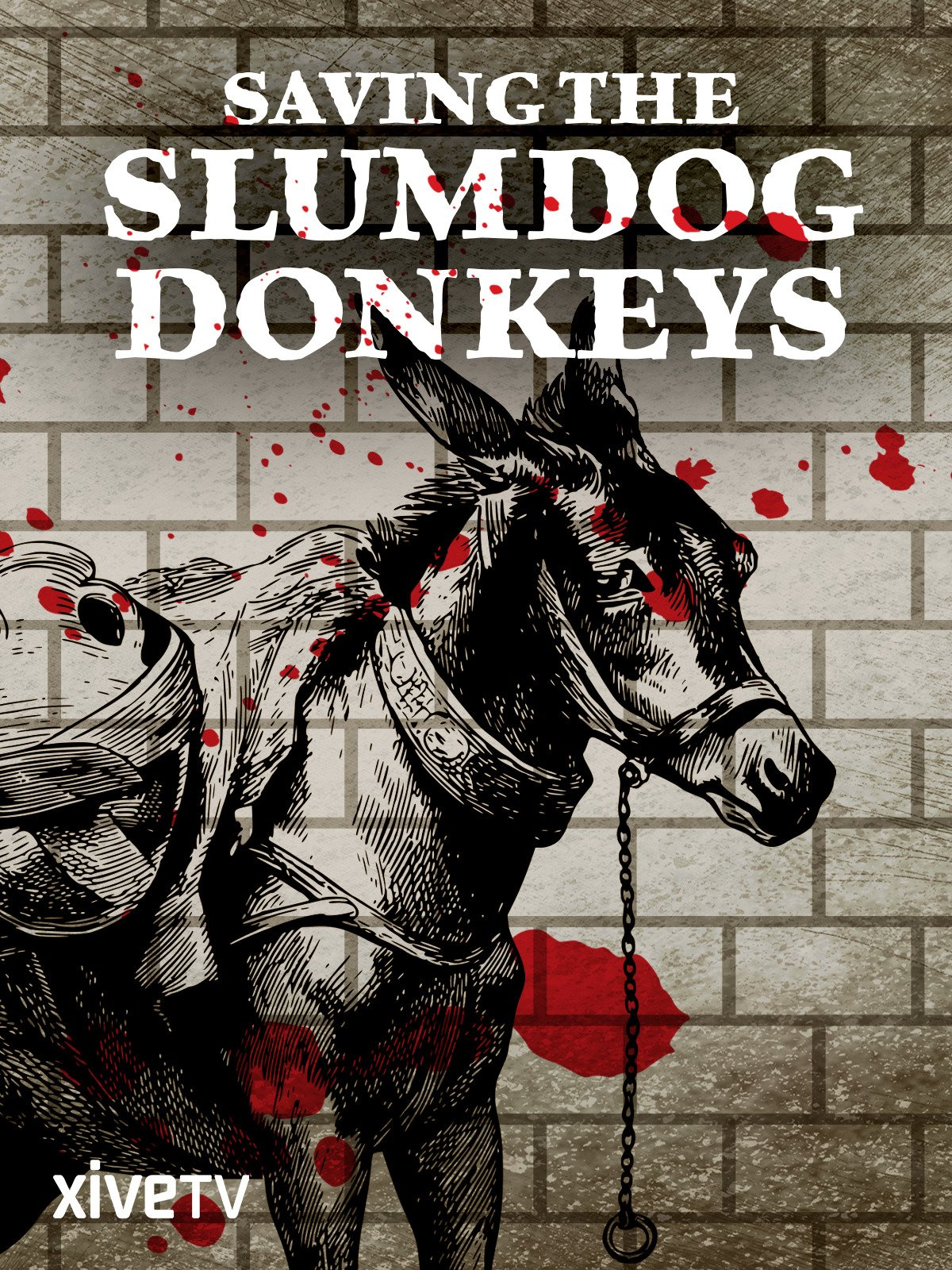 Saving the Slumdog Donkeys on Amazon Prime Video UK