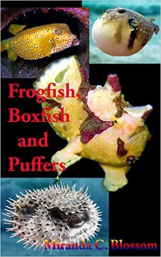 Under the Sea: Frogfish, Boxfish and Puffers