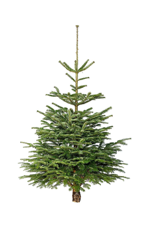 Weihnachtsbaum Nordmanntanne, H ca. 150