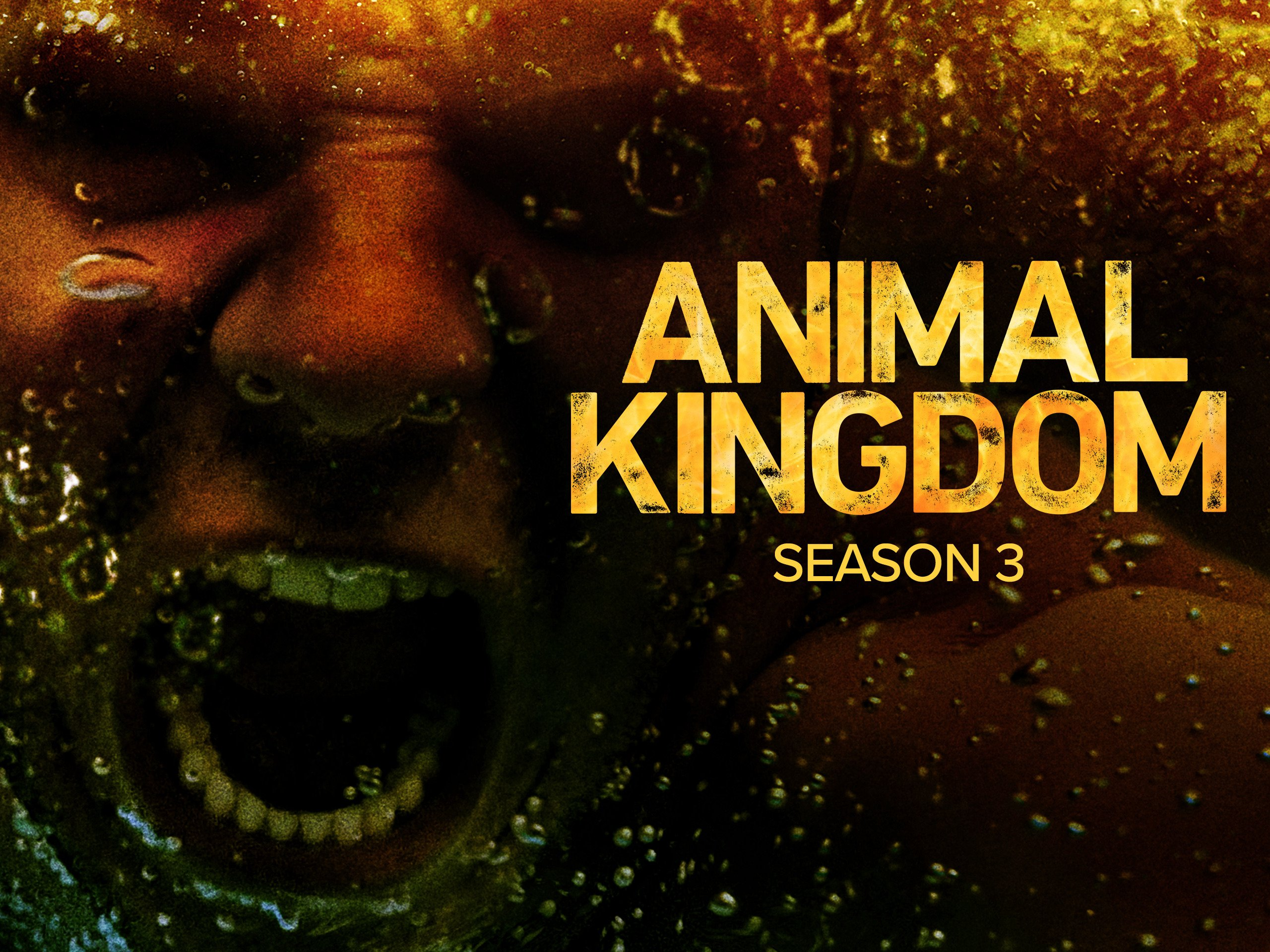 Animal Kingdom - Season 3