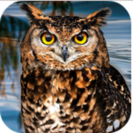 [Owl Bird Survival Simulator] (Fun Dress Up Games For Adults)