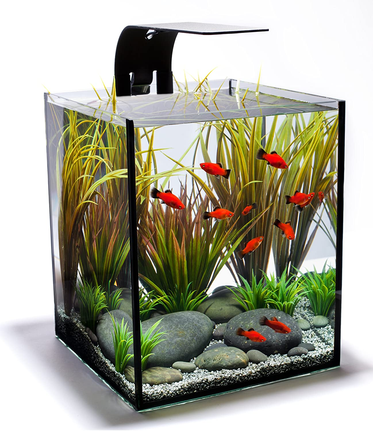 Modern cool small fish tanks for the office desk my dog for Cool small fish tanks