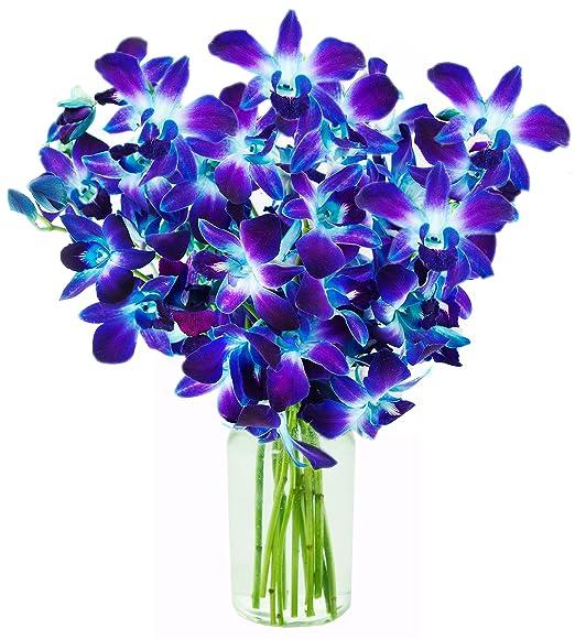 KaBloom | Orchid Bouquet | Vase | Blue | 10 Stems