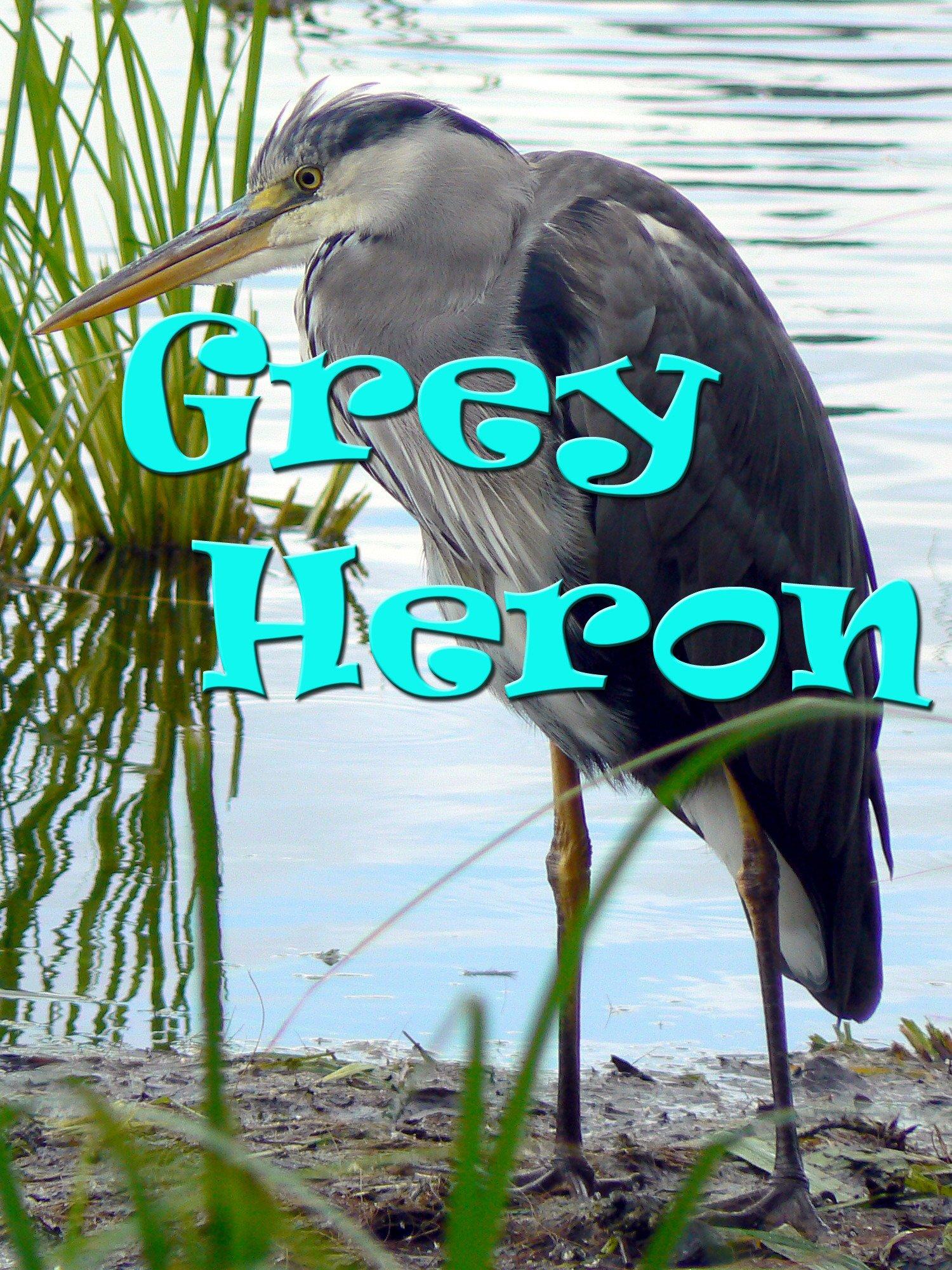 Grey Heron on Amazon Prime Instant Video UK