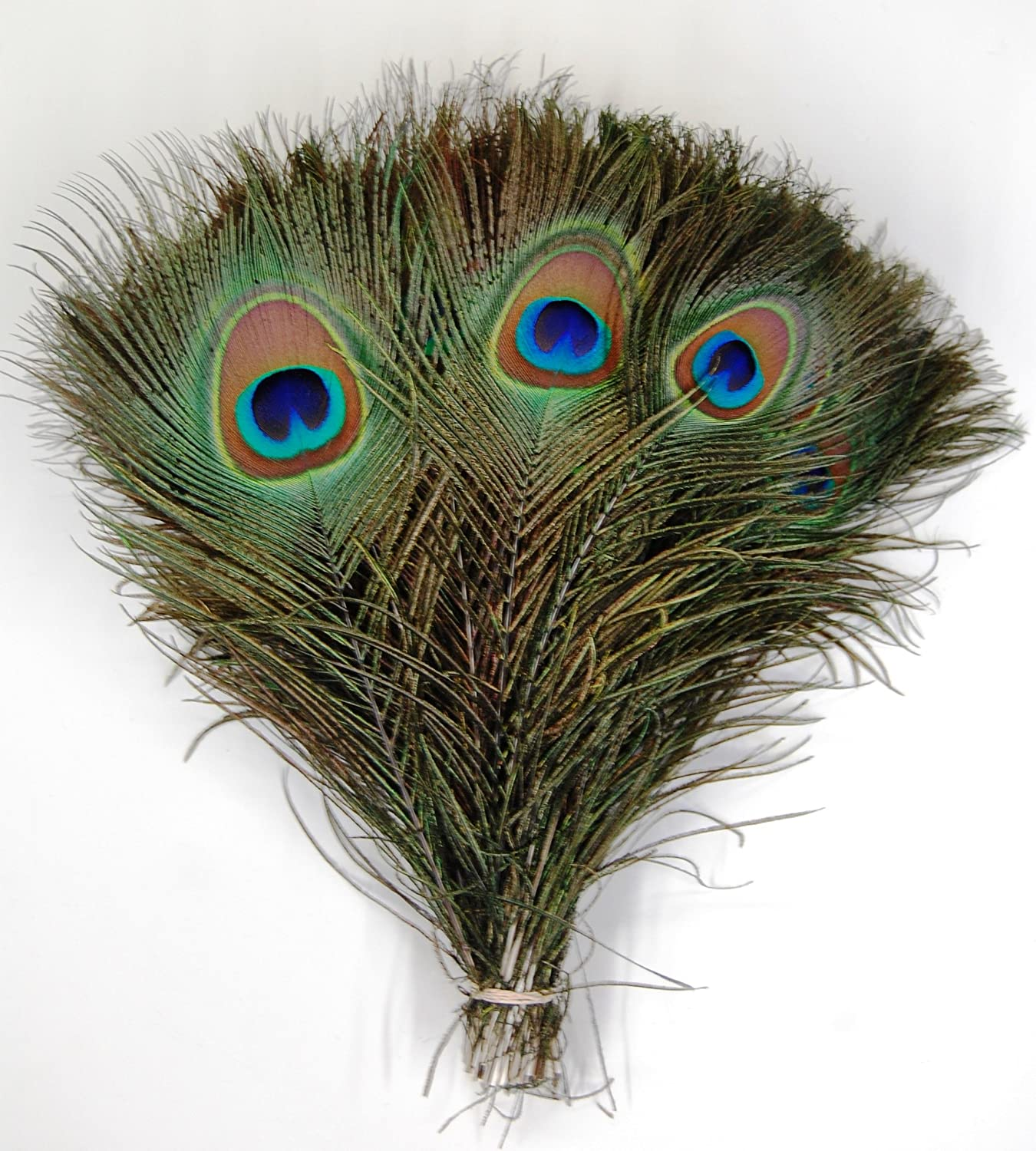 Peacock feathers peacock decor ideas for Peacock feather decorations home