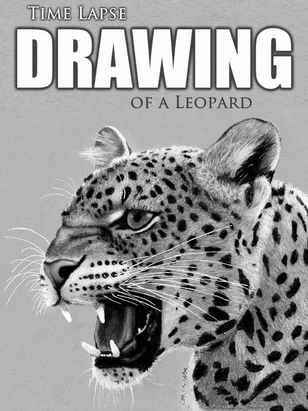 Clip: Time Lapse Drawing of a Leopard