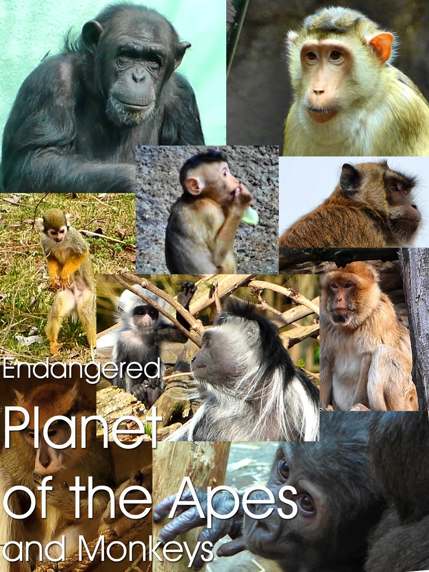 Endangered Planet of the Apes and Monkeys