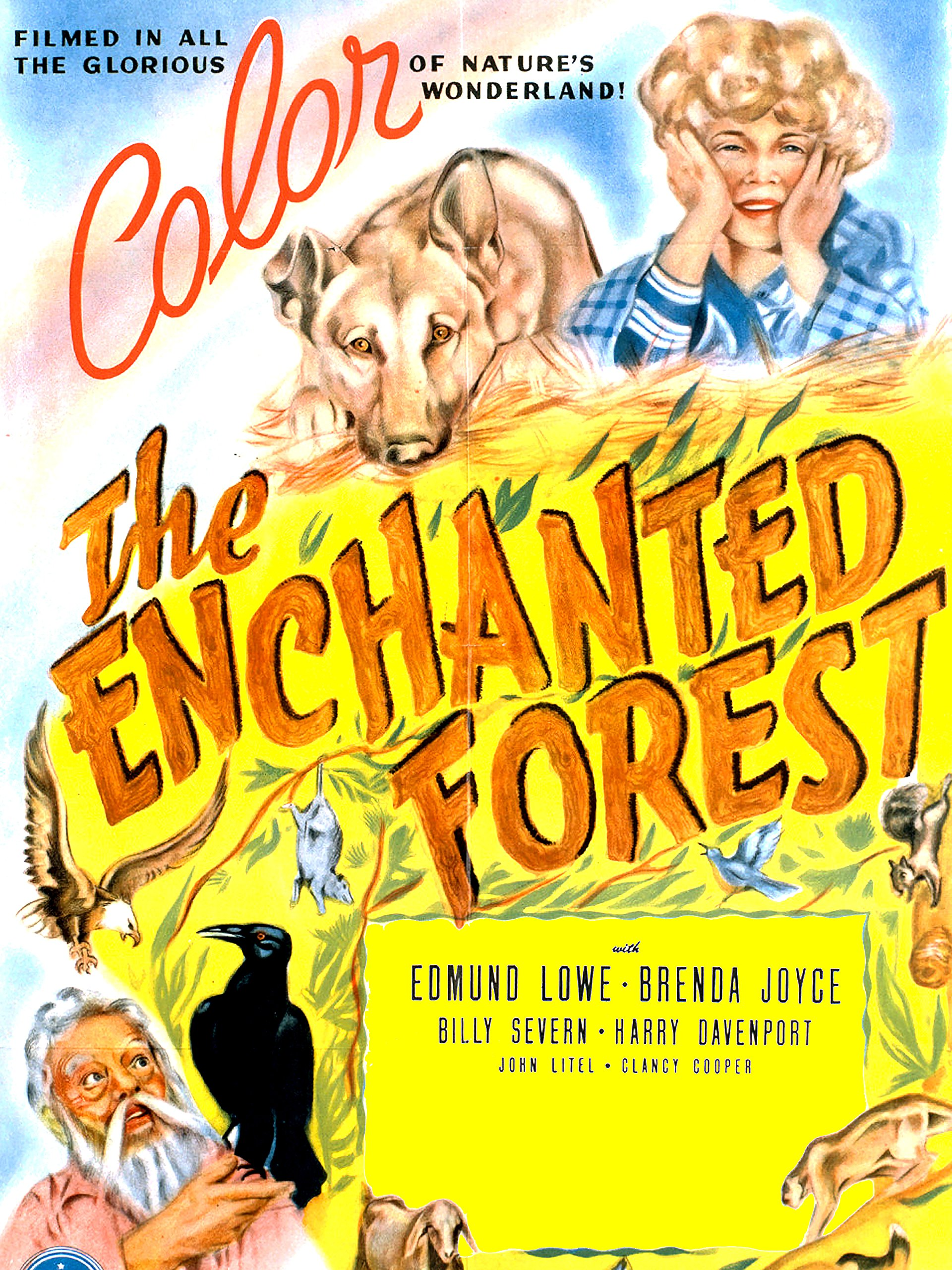 The Enchanted Forest on Amazon Prime Instant Video UK